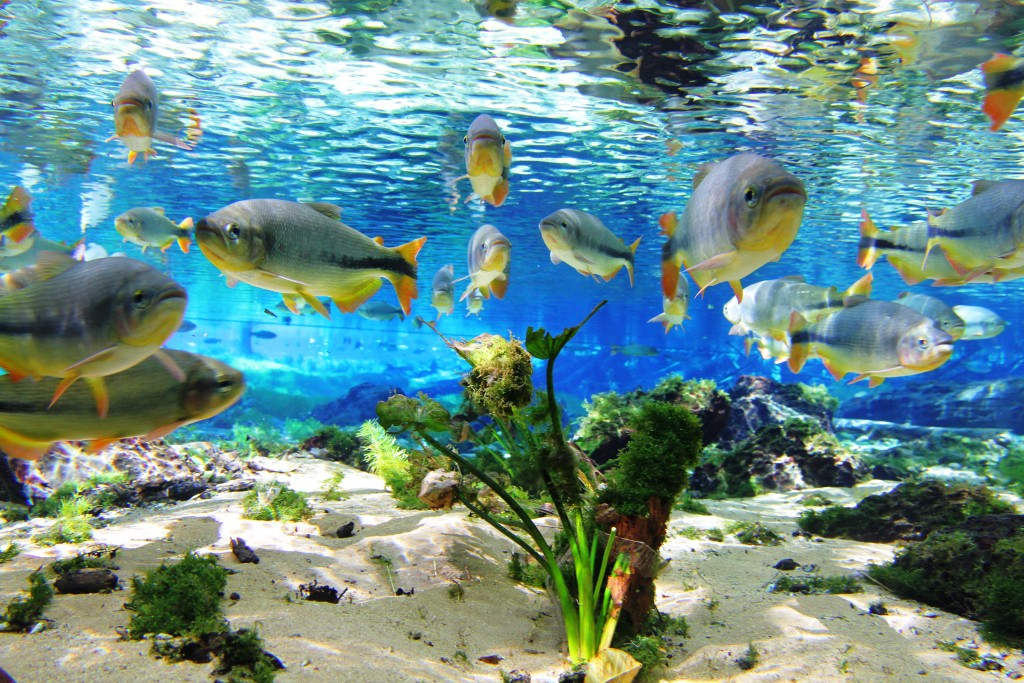 bonito-ms-aquario-natural-flutuacao06-1